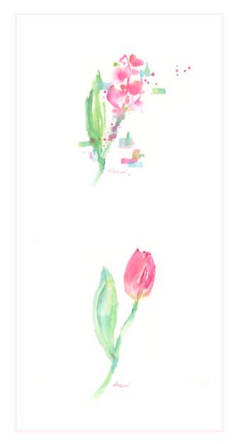 tulipand