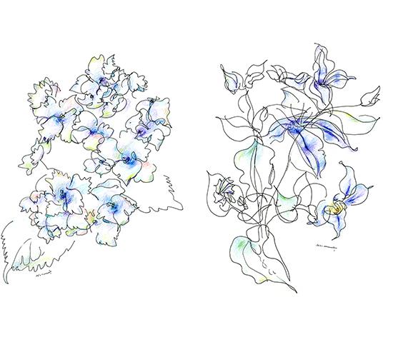hydrangea clematis