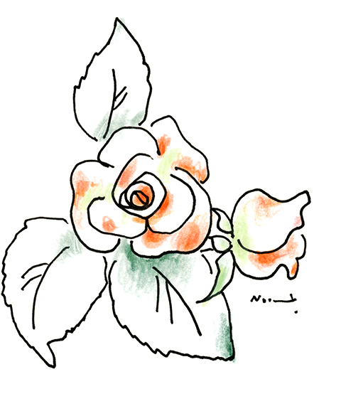 orange miniature rose