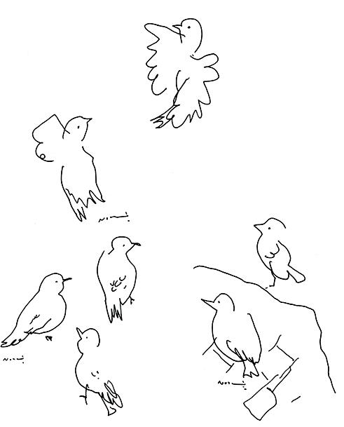 watching wild birds
