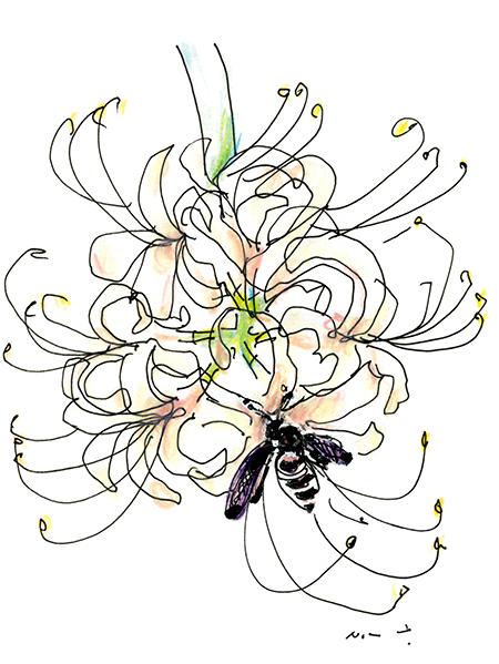 white spider lily 2021
